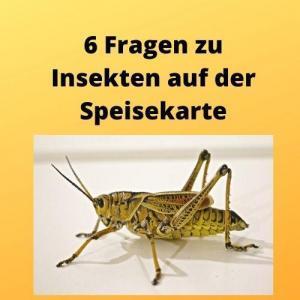 6 Fragen zu Insekten auf der Speisekarte